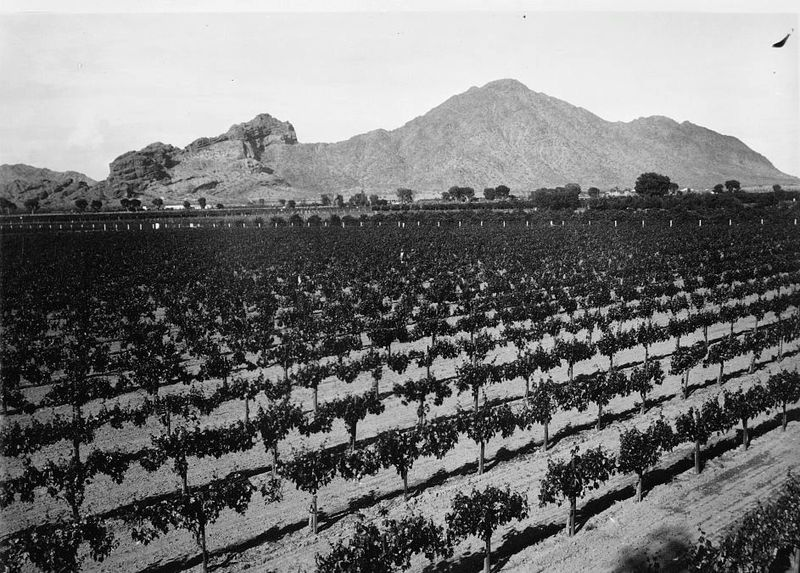 GrapeOrchards