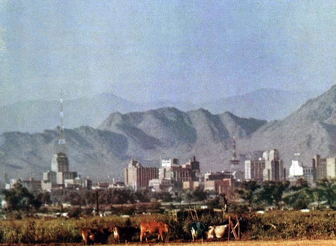 Looking_east_towards_downtown_Phoenix_cows_1957