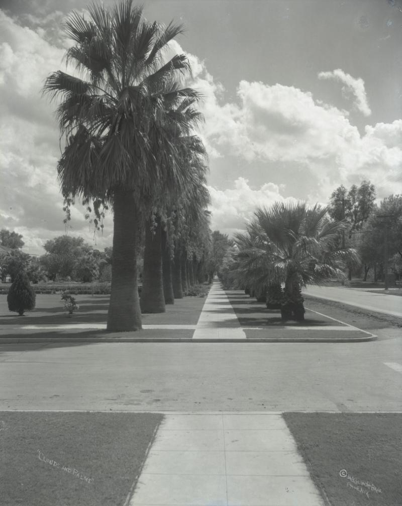 N. Central palms oasis McC