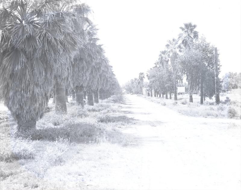 Rural palms McC