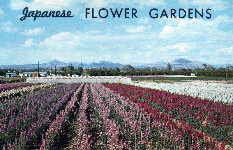 Japanese_Flower_Gardens_postcard_1960s