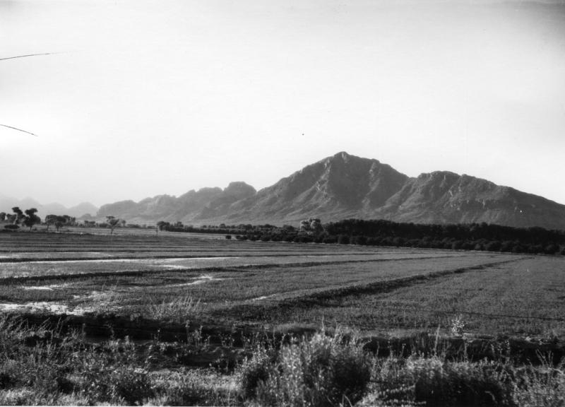 Alfalfa 1923