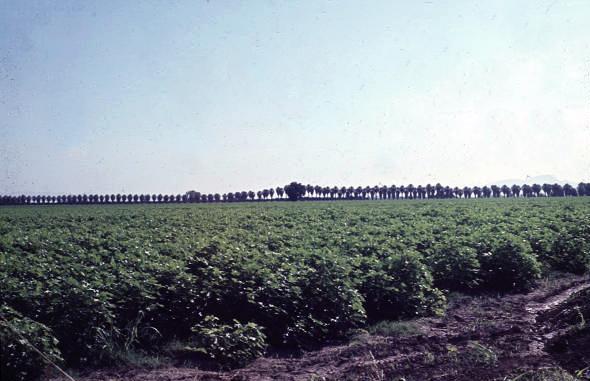 Glendale_Community_College_site_Sahuaro_Ranch_1960s