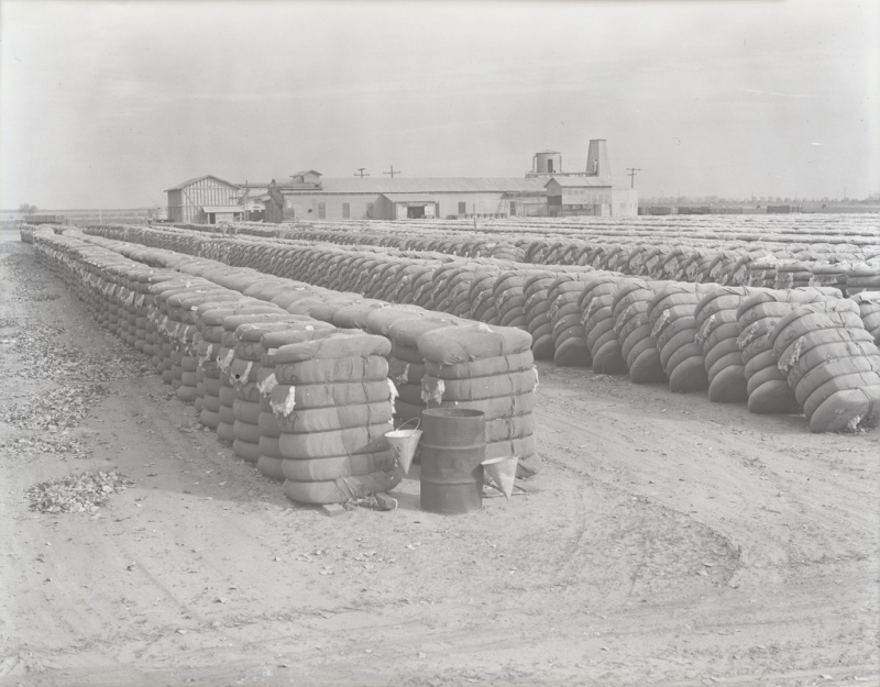 Baled cotton 1930