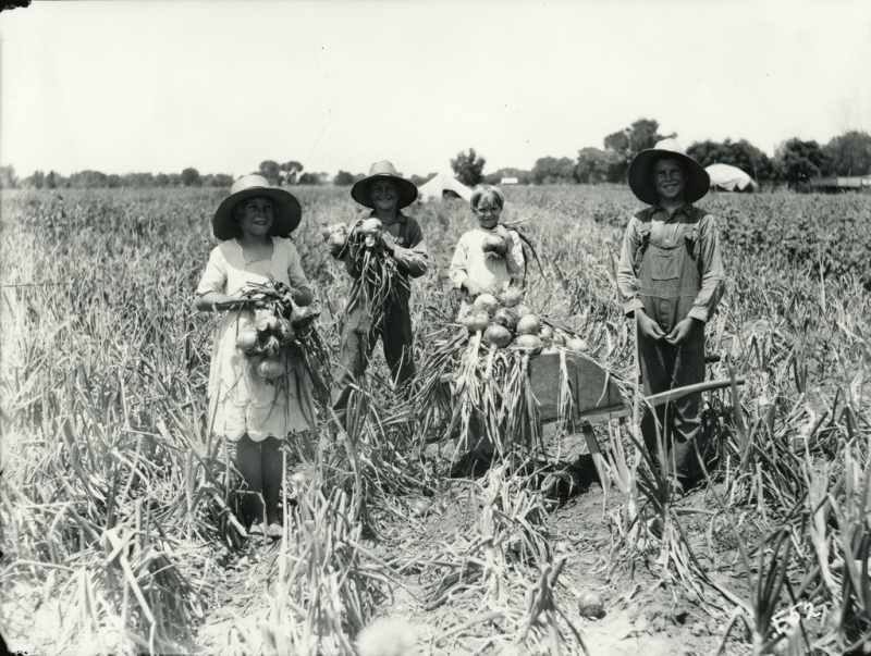 Children onion field 1937
