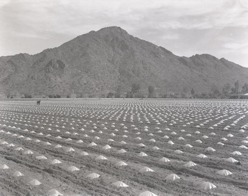 Tomato fields 32 st and camelback 1941 asu
